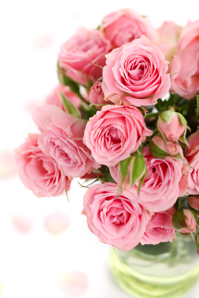 Розовые розы картинки красивые вертикальные, доброе